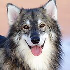 Loki-Utonagan by Photo Scotland