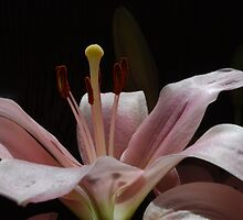 A single song. by Lozzar Flowers & Art