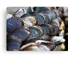 Sea Coloured Mussels Canvas Print