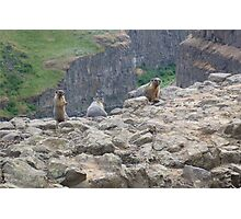 Marmot Family Photographic Print