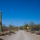 Saguaro National Park - Stop Ahead by gail anderson