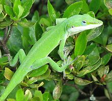 Anole Lizard-Bright Green Camouflage by JeffeeArt4u