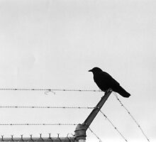 Bird on a Wire by jackshoegazer