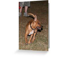 Pet Portraits  Greeting Card