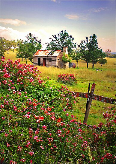 Rambling Roses by Kym Howard