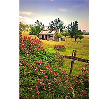 Rambling Roses Photographic Print