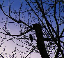 Starling watching over twilight by Thomas Stevens