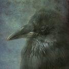 Beautiful Raven by Susanne Correa