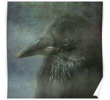 Beautiful Raven Poster
