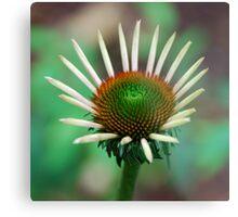 Healing Flower Metal Print
