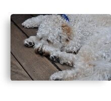 Boomer the Labradoodle Canvas Print