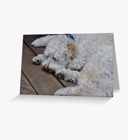 Boomer the Labradoodle Greeting Card