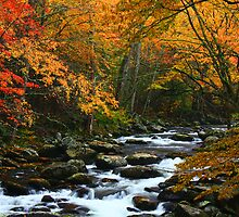 AUTUMN,MIDDLE PRONG LITTLE RIVER by Chuck Wickham