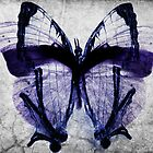 The butterfly Fx by Orlando Rosado