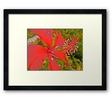 Ruby Crown. Framed Print
