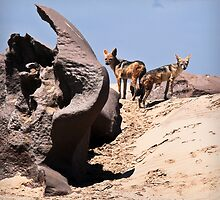 Jackals | Skeleton Coast by Olwen Evans
