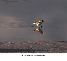 Red Capped Plover by rodesigns