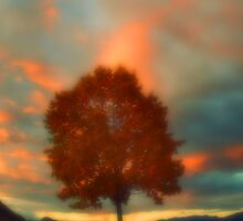 Tree on Fire by Tara  Turner