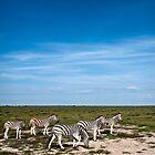 Zebra | Etosha Pan by Olwen Evans