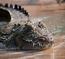 Crocodile | Kunene River by Olwen Evans