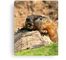 bored marmot Canvas Print