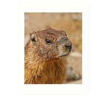 Marmot head Art Print