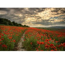 Poppies Sunset - South Downs Sussex Photographic Print