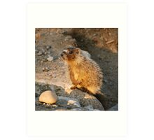 marmot pup Art Print