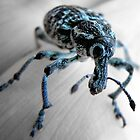 weevil by catealist