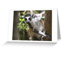 Curious Lemur ~ landscape Greeting Card