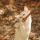 White Kitten Biting on Stick  by jojobob