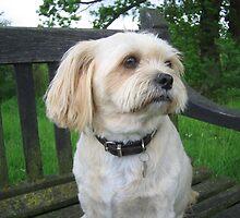 Max at Ickworth Park  by Crystallographix