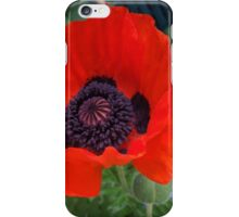 First Poppy of the Season in Mo's Garden 3 iPhone Case/Skin