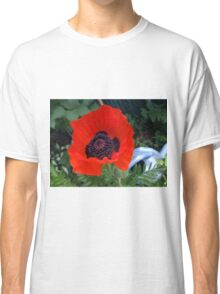 First Poppy of the Season in Mo's Garden 3 Classic T-Shirt