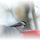 Chickadee by rasnidreamer