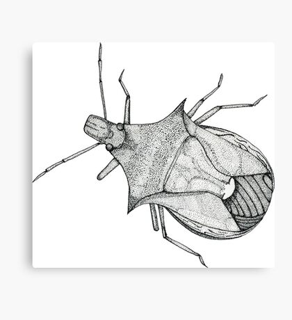 Stink Bug Pen and Ink Canvas Print