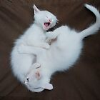 White Kittens Playing  by jojobob