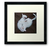 White Kittens Playing  Framed Print