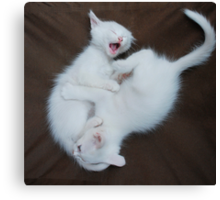 White Kittens Playing  Canvas Print