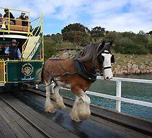 Granite Island Tram by Karen Gunn