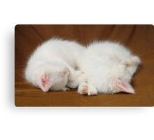 Two Sleeping White Kittens  Canvas Print