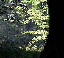 Hidden View by Sabine Jacobsen [SJArt]