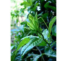 green grows my garden Photographic Print