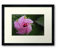 Beautiful Hibiscus 1 Framed Print