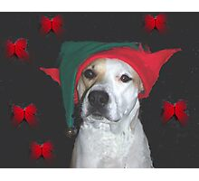 elf supervisor Photographic Print