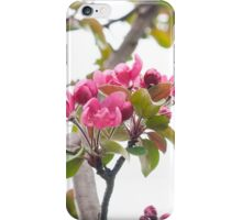 tender spring flowering iPhone Case/Skin