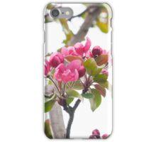 tender spring flowering iPhone Case/Skin