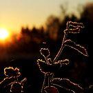 A frosty december morning by Alan Mattison