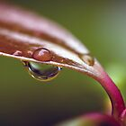 Dew drop on a leaf by dstorm31