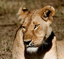 The Lioness - Masai Mara Safari by StuartGLoch